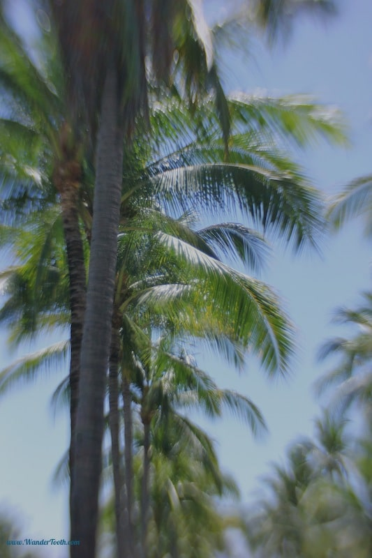 Palm is our favoritest of the trees. When we got married, we promised each other we would never settle somewhere that palm trees can't survive