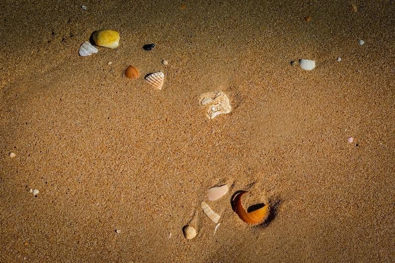 Shells 2