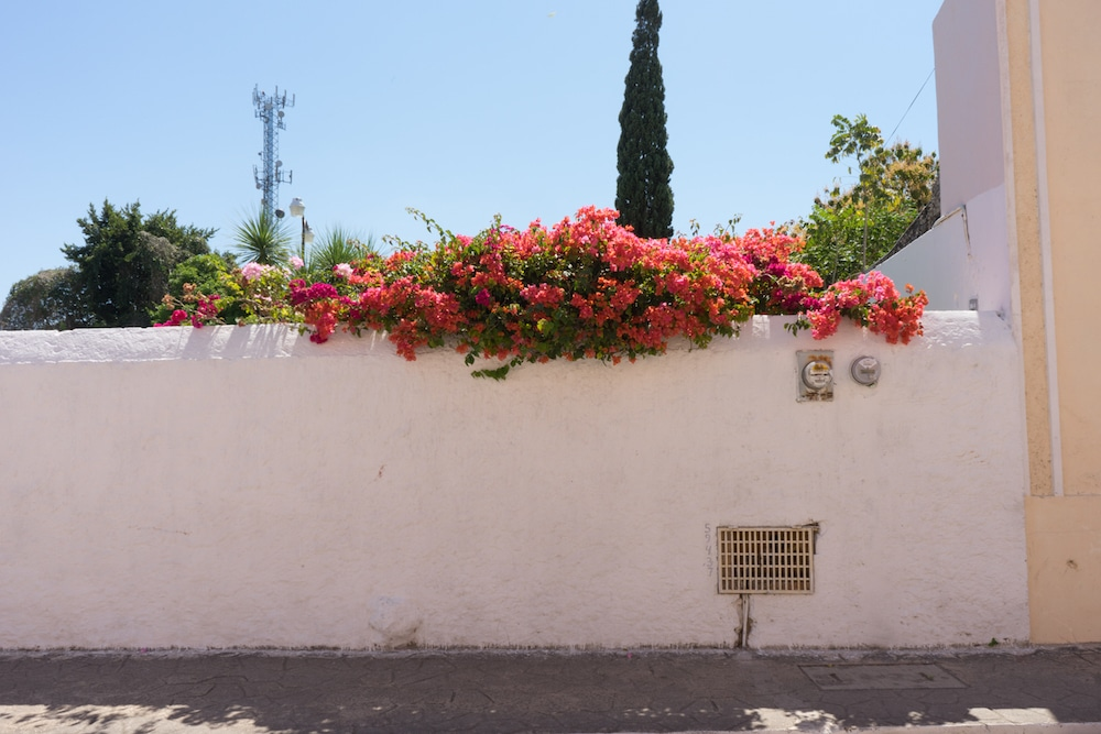 pink bougainvillea spilling over a whitewashed wall