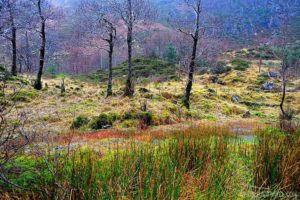 The Scottish Highlands are some of the best places to visit in Scotland
