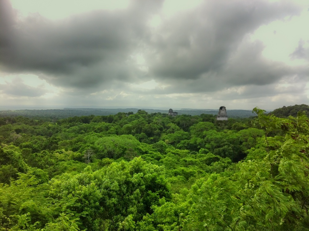 A view of the jungle in Tikal, Guatemala