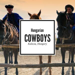 Hungarian Horse Show in Kalosca Featured Image