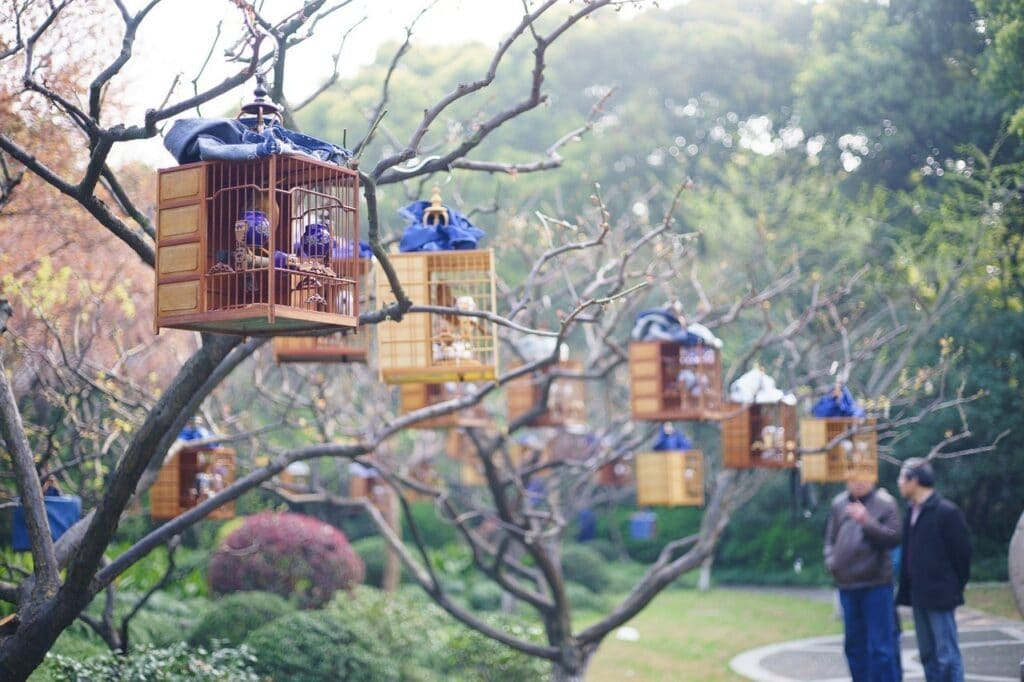 Where to stay in Shanghai French Concession Bird Cages