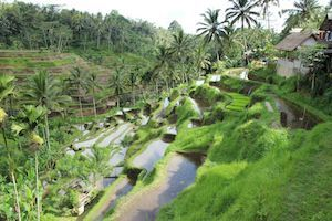 All Inclusive Bali Tour
