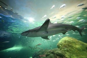 Ripley's Aquarium in Toronto is one the the best things to do in Toronto