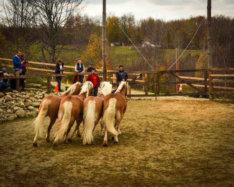 Riding horses at Potcoava Romania. Potcoava makes a good Bucharest day trip or overnight trip