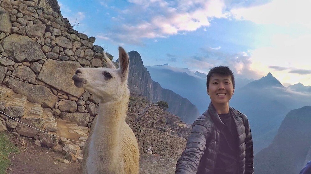 Get up close and personal with llamas during your visit cusco