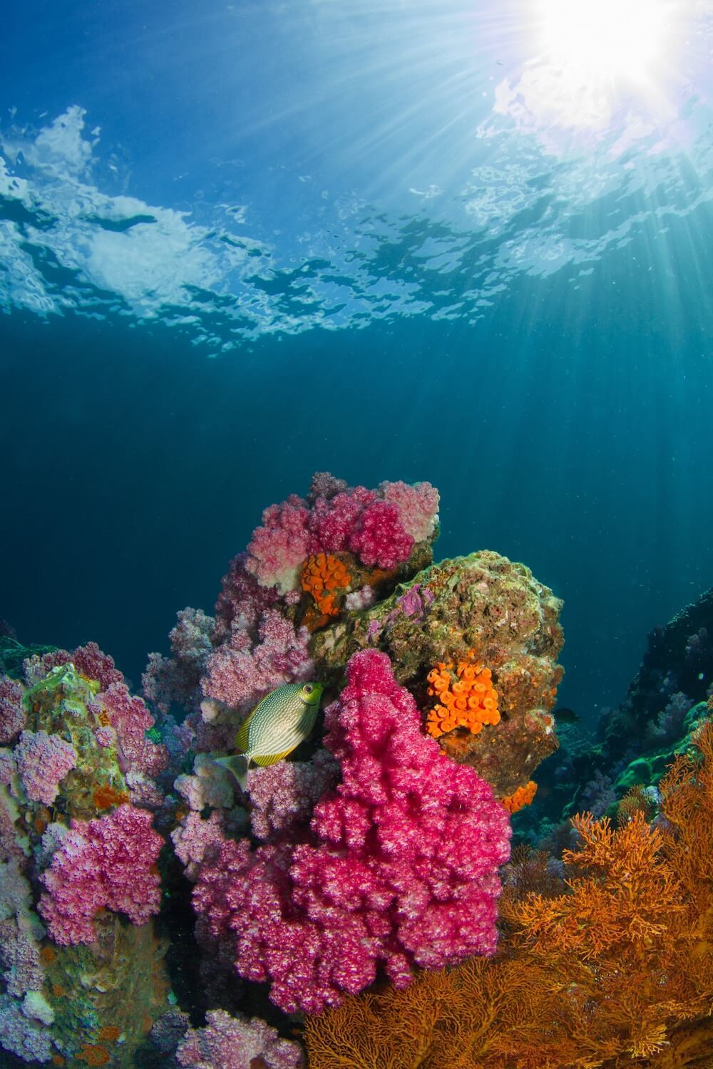 diving in Koh Lipe Thailand is some of the best in the world