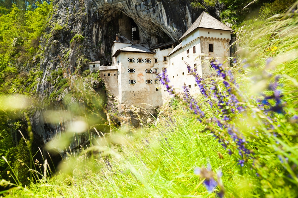 Blue spring flowers and Predjama castle on background